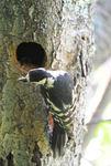 鳥−2.jpg